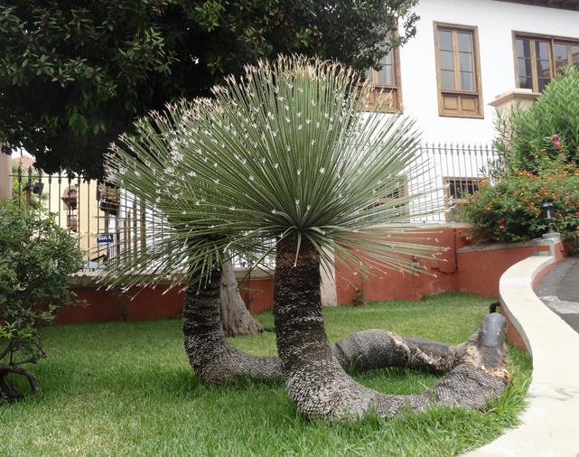 Tenerife augustus 2014 op stap for Botanische tuin tenerife